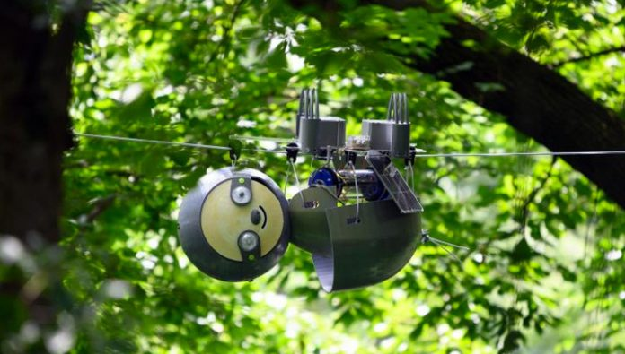 Robot-Lenivets solar will be able to years to observe wildlife